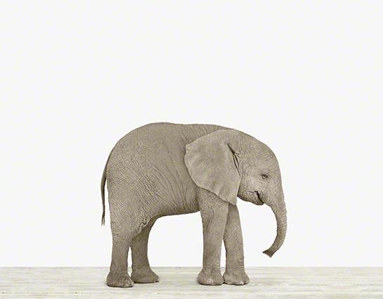 62bbbe5b295f Baby Elephant Nursery Art — The Animal Print Shop
